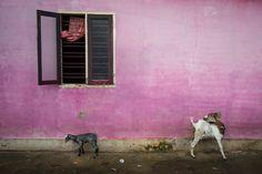 Alex Webb - Kochi, India, 2014