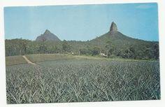 Australian Vintage Postcard, Glasshouse Mountains Peaks, Beerwah, Unused