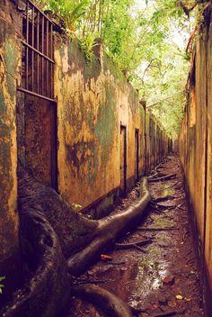 A antiga prisão da Ilha do Diabo, na Guina Francesa, foi dominada pela floresta Foto: Tom Parrott/Journey Latin America