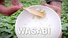 This Is Where Real Wasabi Comes From (What You're Eating Is Fake)  <- Mimicking a river is NOT the perfect climate. This MUST be expensive