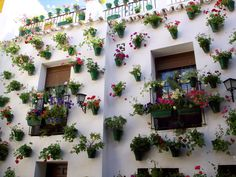 Flower house - so cute!
