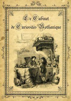 """""""Mon Cabinet de Curiosités"""" par Camille Renversade: Le Cabinet de curiosités naturelles du Professeur Irénée Cornélius"""