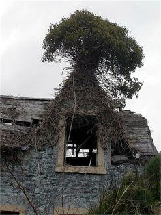 casa arbórea.