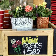 Trader Joe's Mini Rose #Traderjoes #rose #flower #トレーダージョーズ #バラ #ローズ