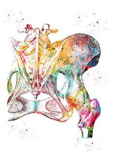 'Hip bone, ligaments and joint' by erzebetth Hip Anatomy, Human Anatomy Art, Human Body Art, Clinic Design, Medical Art, Hip Bones, Canvas Prints, Art Prints, Office Art