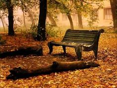 Park Bench Photo: This Photo was uploaded by surfsunskate. Find other Park Bench pictures and photos or upload your own with Photobucket free image and . Fall Desktop Backgrounds, Desktop Wallpapers, Windows Desktop, Natur Wallpaper, Fall Wallpaper, Leaves Wallpaper, Iphone Wallpaper, Pumpkin Wallpaper, Beautiful Wallpaper