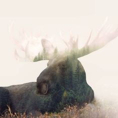 Smoky Double Exposure Animals Illustrations – Fubiz Media