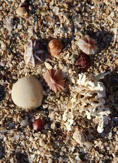 Orpheus Island Stuffed Mushrooms, Posts, Island, Vegetables, Blog, Stuff Mushrooms, Messages, Islands, Vegetable Recipes