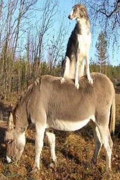 Donkey Back Ride