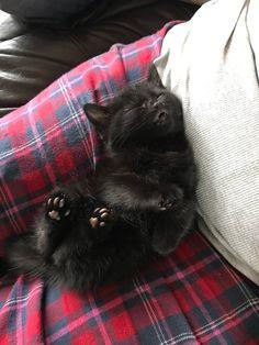 38 ideas funny cats sleeping so cute Pretty Cats, Beautiful Cats, Animals Beautiful, Sleeping Kitten, Sleeping Dogs, Sleeping Animals, Cute Little Animals, Cute Funny Animals, Funny Dogs