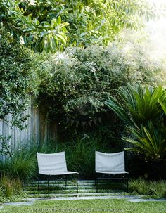 Garden furniture with Abelia x grandiflora & Cycas revoluta - Garden Design