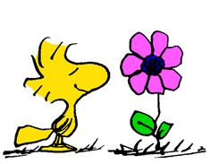 Woodstock and The First Flower of Spring
