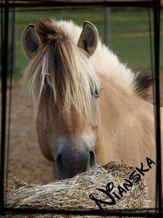 nianska Horses, Animals, Animales, Animaux, Animal, Animais, Horse
