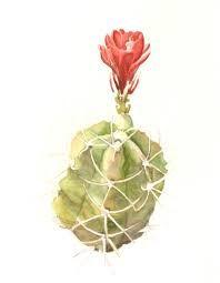 Resultado de imagem para botanical drawing watercolor