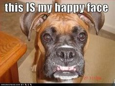 I love boxer dogs