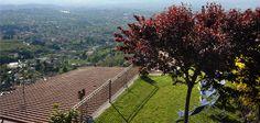 Giardino, Solarium, Panorama Roma Vineyard, Sidewalk, Outdoor, Outdoors, Vine Yard, Side Walkway, Walkway, Vineyard Vines, Outdoor Games