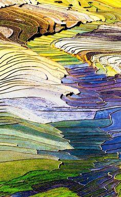 iris-flower Terraced rice fields in Sapa, Lao Cai, Vietnam   17 Unbelivably Photos Of Rice Fields.