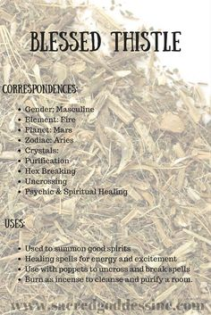 Magick Herb Blessed Thistle: 2x3 bag for sale