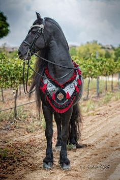 Looks like a war horse! Most Beautiful Horses, Pretty Horses, Horse Love, Animals Beautiful, Horse Armor, Horse Gear, Horse Tack, Medieval Horse, Horse Costumes