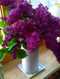 Love the dark color lilac. Is there anything better than a bunch of fragrant lilacs to brighten up a Spring day? Lilac Tree, Lilac Flowers, Exotic Flowers, Beautiful Flowers, Purple Love, Purple Lilac, Deep Purple, Belle Photo, Beautiful Gardens