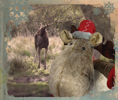 Our office reindeer tried to make some new friends at the Curraghs Wildlife Park as he hunted for a new home