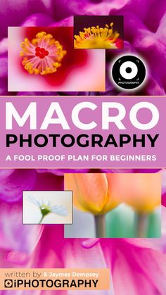 Do you struggle with getting pin-sharp macro photos? iPhotography and Jaymes Dempsey have teamed up to reveal a 5 step guide to get crystal clear shots. Best Photography Blogs, Amazing Photography, Flower Photography, Beautiful Flowers Photos, Flower Photos, Macro Photographers, Simple Subject, Cool Pictures, Step Guide