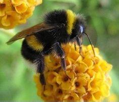 Beesafe!