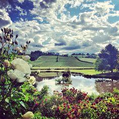 Spring in the vineyard at Josef Chromy Winery. #winery #tasmania #discovertasmania Image Credit: Nicole Warne