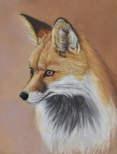 """This is a small pastel of one of my favorite subjects, the red fox. I call it """"Little Red."""" Available through my website."""
