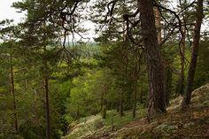 """""""Maa- ja metsätalousministeriö on toistellut jatkuvasti, että (metsä)lakiesitys perustuu lakimuutosta valmistelleen työryhmän lähes yksimieliseen esitykseen. Ministeriö on kuitenkin jättänyt kertomatta, että työryhmässä kaikki ekologista kestävyyttä edustaneet tahot jättivät esitykseen eriävän mielipiteen. Valtaosa näistä näkemyksistä on jätetty huomiotta hallituksen esityksessä"""", sanoo WWF Suomen metsäasiantuntija Panu Kunttu."""