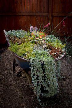 Wheelbarrow – Creative Planter Ideas for the Spring