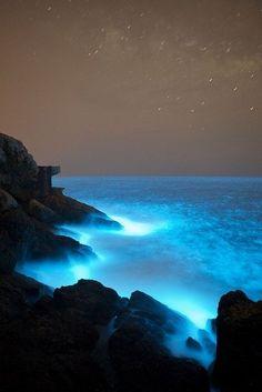 Stunningly beautiful |Bioluminescence| |nature| #Bioluminescence #nature https://biopop.com/