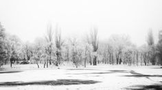Nicu, Snow, Black And White, Outdoor, Outdoors, Black N White, Black White, Outdoor Games, The Great Outdoors