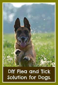 How to Deal with an Overly Excited Dog: When people have an excited dog, they often try to run away from a situation. However, its better to just help your excited dog through the situation. Dog Commands Training, Basic Dog Training, Training Your Puppy, Potty Training, Training Dogs, Toilet Training, Excited Dog, Farm Dogs, Aggressive Dog