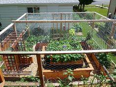 Words from Willow: Our Garden Project Marathon Rabbit Fence, Garden Netting, Lattice Top, Victory Garden, Garden Projects, Garden Ideas, Garden Spaces, Raised Garden Beds, Organic Gardening
