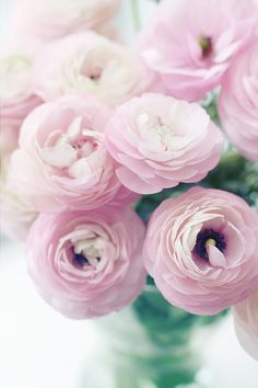 pink persian ranunculus.  I think I want to plant some of these.