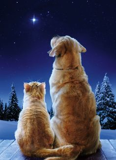 May all my Pinterest Friends have a Meowy Christmas  a Tail-Waggin' New Year!  =o)