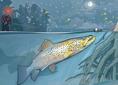 Nighttime Tactics for Big Brown Trout | Field & Stream