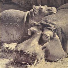 Safari-Tierkindergarten-Wand-Dekor Kinderzimmer von GrowthChartArt