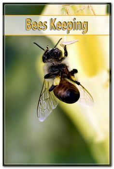 Honey is the most known apicultural product as well as there have actually currently been found in the honey even more than 180 different dietary substances. Bee Pictures, Honey Bees, Health Facts, Bee Keeping, Wellness, Tips, Bees, Counseling