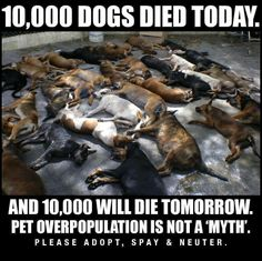 Please people dont forget all the dogs that have been killed every day in the shelters, may all of them RIP and please spread the word to spay and neuter so we can stop all of this senseless killings at the shelters