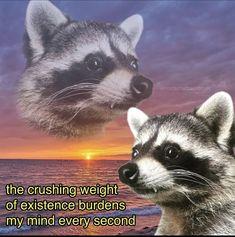 Stupid Memes, Stupid Funny, Haha Funny, Hilarious, Cute Memes, Dankest Memes, Funny Memes, Animal Memes, Funny Animals