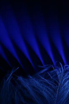 quenalbertini: All in blue