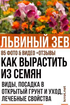 Small Farm, Vegetable Garden, Vegetables, Flowers, Plants, Gardening, Sodas, Lawn And Garden, Garten