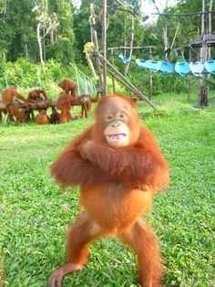 """Fitz, the new security manager at BOS Nyaru Menteng Project.   Home of Animal Planet's """"Orangutan Island""""."""