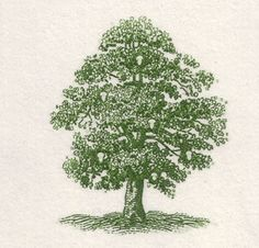 This beautiful steel die engraving was hand cut by  John Wallace, master engraver, and was given to  Mrs. Collins as a gift after she and her husband  lost fifty some-odd trees due to the storms in southern Louisiana in 2005. :: Nancy Sharon Collins Stationer ::