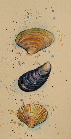 Ideas Nature Artwork Draw Water Colors For 2019 Sea Life Art, Sea Art, Natural Forms Gcse, Shell Drawing, Gcse Art Sketchbook, Tinta China, Nature Artwork, A Level Art, Fish Art