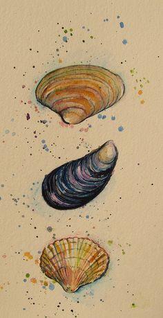 sea shells   Flickr - Photo Sharing! by Abi Whelan