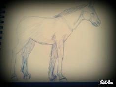 ... At ... Horse