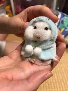 Hamster with a hoodie Click here for more adorable animal pics!